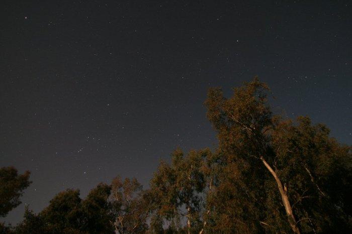 Constelaciones con arboles en luna llena