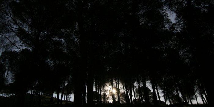 Luna llena entre pinos